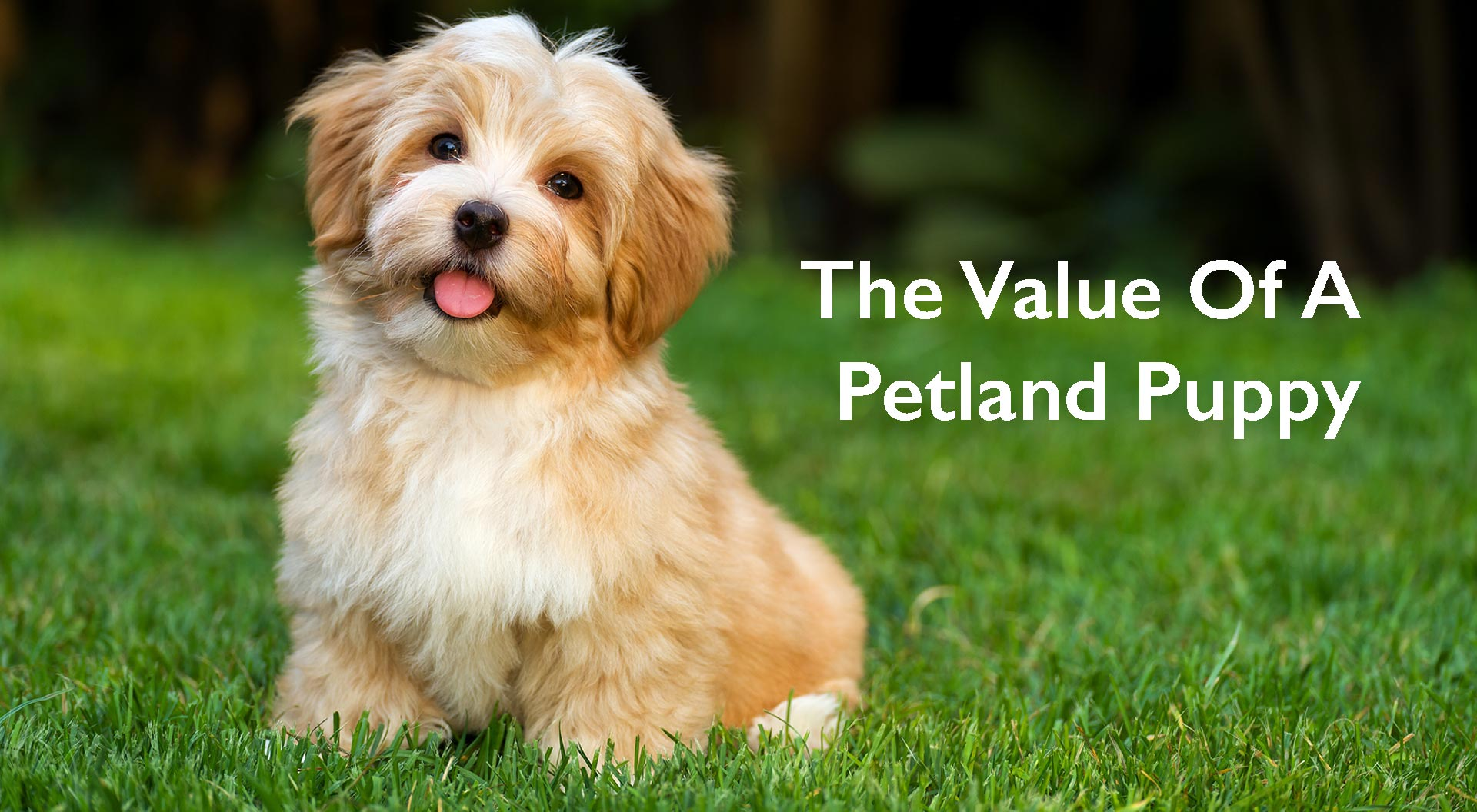 Petland Mall of Georgia Value of a Petland Puppy