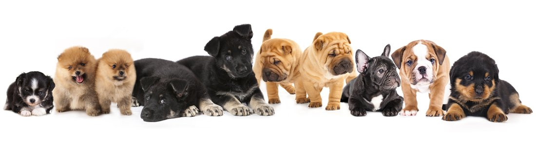 buy dogs in kennesaw ga