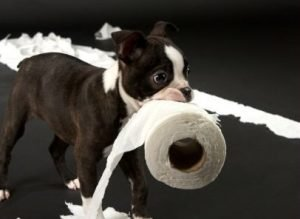 how to potty train a dog in 7 days