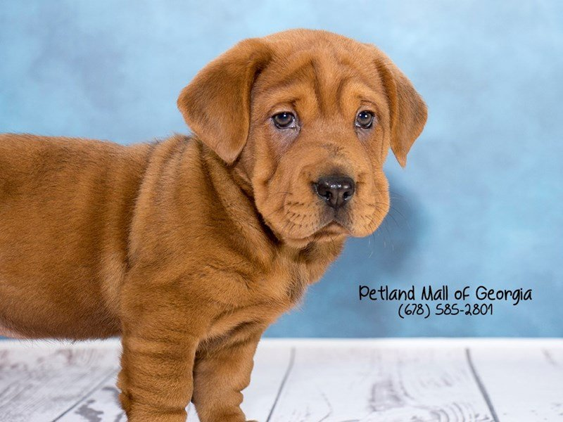 What's Up With Walrus Puppies for Sale? - Petland Mall of