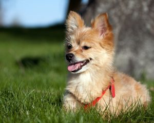 cutest mixed dog breeds