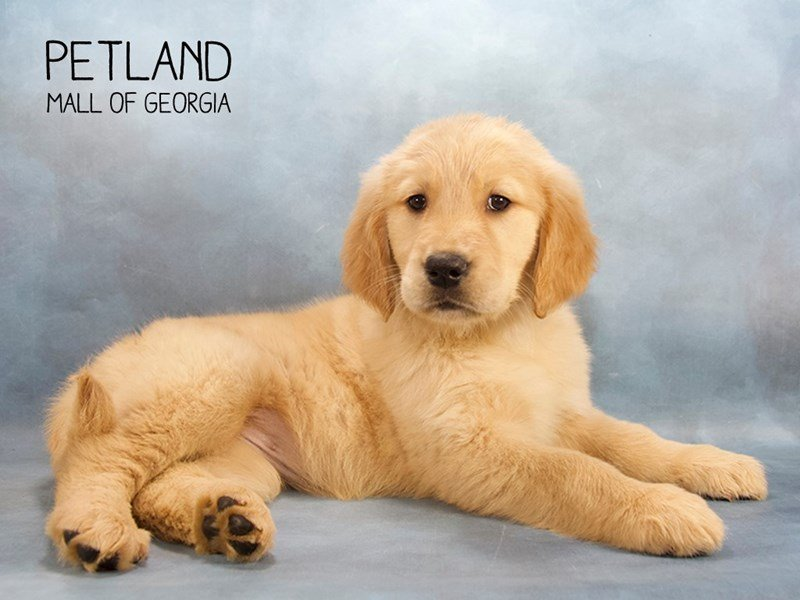 Petland Mall of Georgia - Buy Premium Pets, Puppies & Supplies